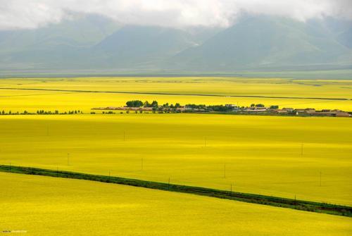 来自青藏高原的精品菜籽油 — 中国•青海